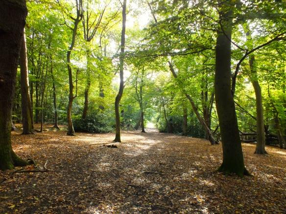 The leaf-littered pathways of Whitewebbs Park.